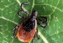 Study identifies characteristics of Lyme disease hospital patients in England and Wales