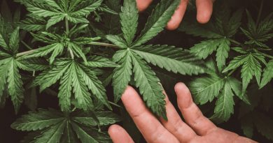 Cannabis: Higher risk for heart problems